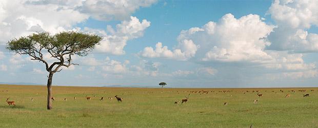 savanne620